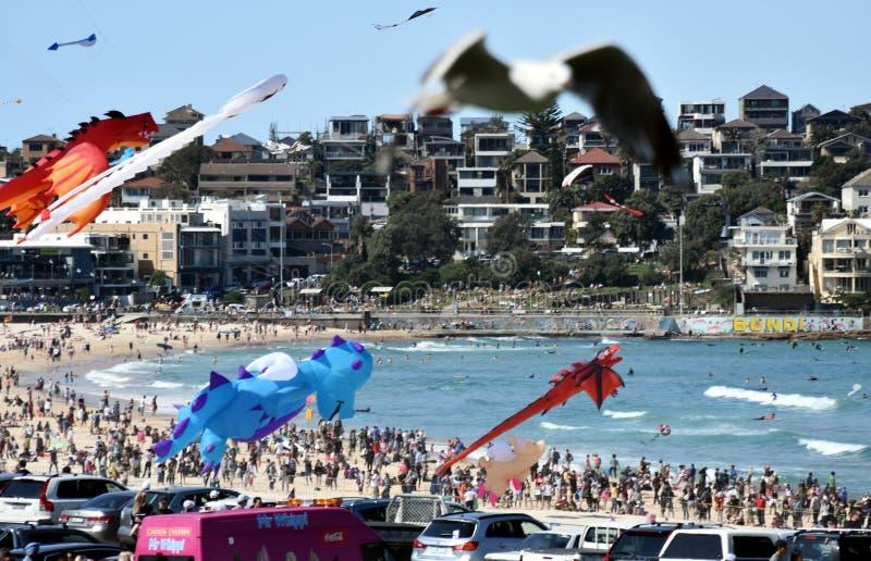 Festival av vindarna, Bondi strand Sydney arkivfoton