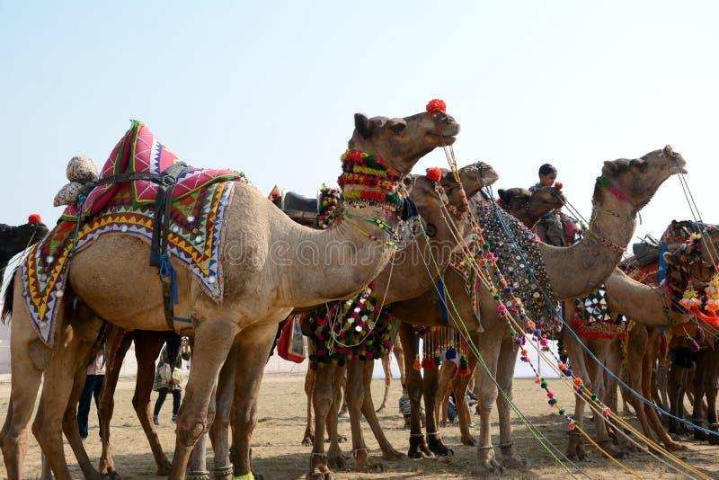 Festival Bikaner 2017 del camello fotografía de archivo libre de regalías