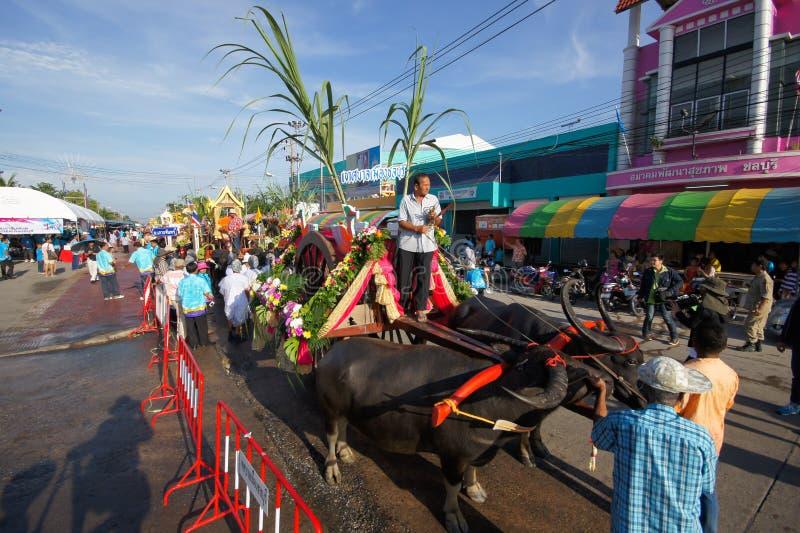 Download Festival Buffalo racing editorial photo. Image of chonburi - 34503321