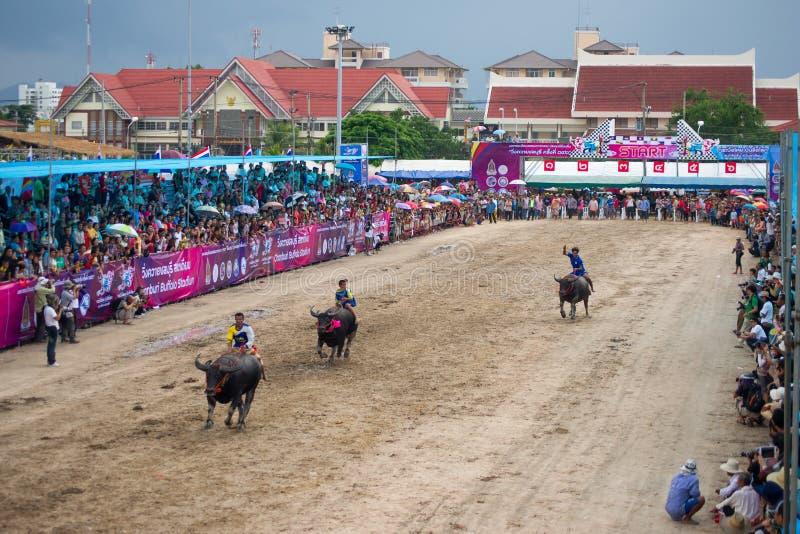 Download Festival Buffalo racing editorial image. Image of chonburi - 34504280