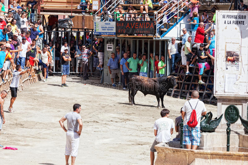 Festival of bulls and horses in Segorbe, Spain. September 14, 2013. Annually the Holiday attracts more than 200 000 people stock photo