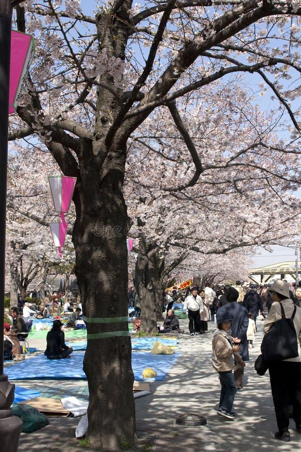 Festival da flor de cereja fotografia de stock royalty free