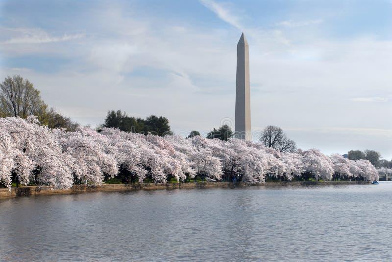 Festival da flor de cereja foto de stock