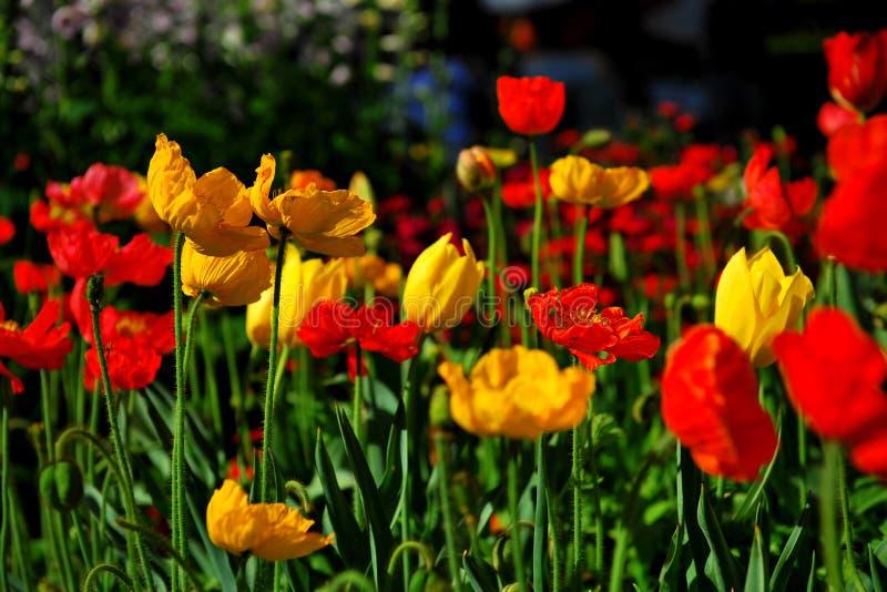Festival da flor em Toowoomba foto de stock