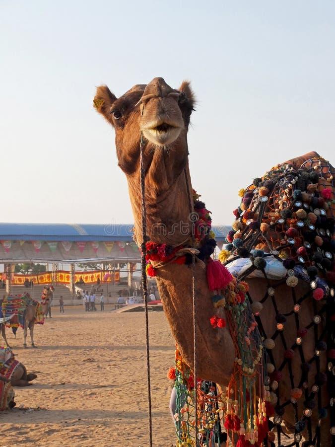 Festival de camellos en la India fotos de archivo