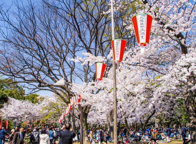 Festival de Hanami fotos de stock royalty free
