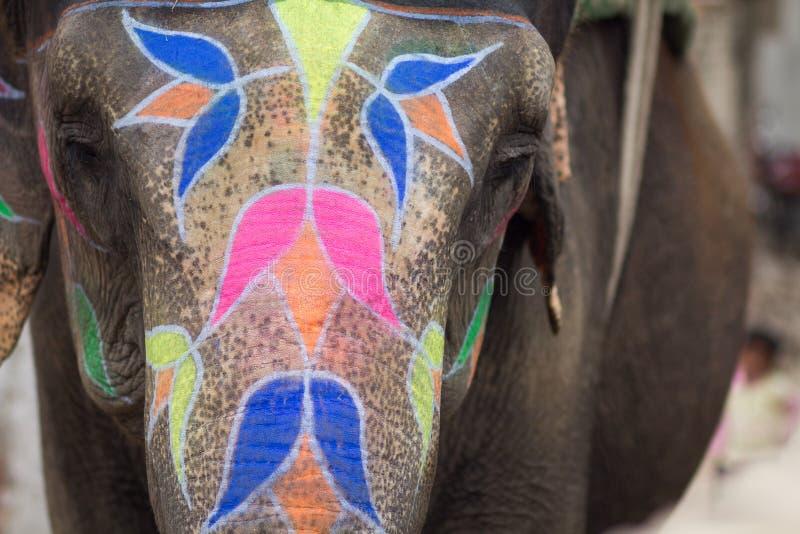 Festival de Holi do elefante em Jaipur, Índia imagens de stock