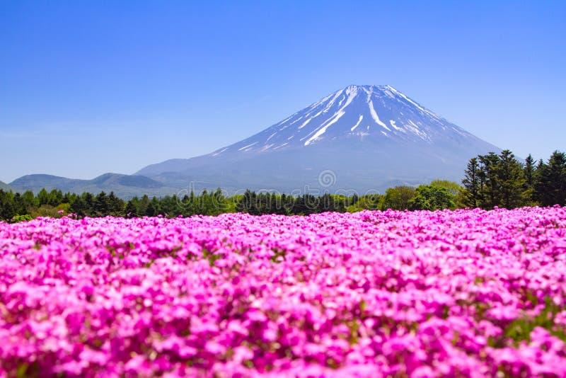 Festival de Japão Shibazakura com o campo do musgo cor-de-rosa com montanha Fuji Yamanashi, Japão imagem de stock royalty free