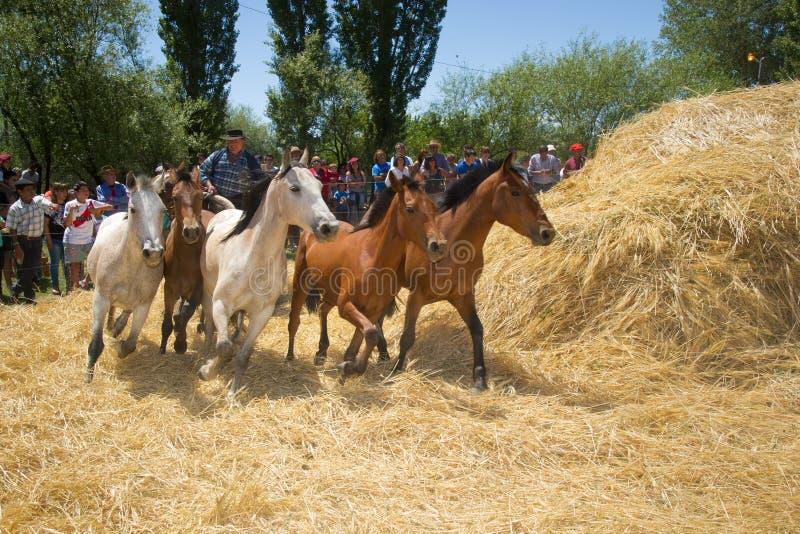 Festival de l'aco de ` de Ã, EL Cholar, Neuquen, Argentine photographie stock libre de droits