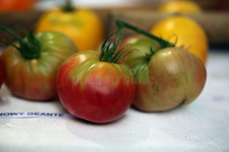 Festival de la tomate fotografía de archivo libre de regalías