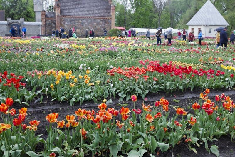 Festival de tulipas da mola na vila fotos de stock royalty free