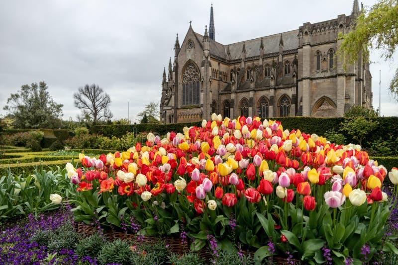 Festival de tulipe de château d'Arundel photographie stock