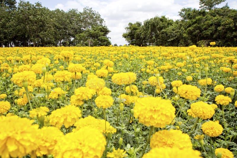 Festival del fiore del tagete in Tailandia immagini stock libere da diritti