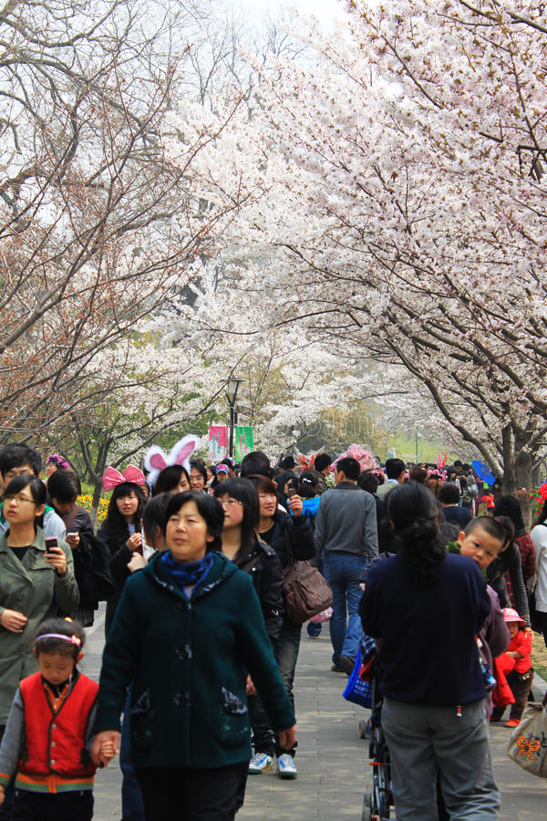 Festival del flor de cereza de Pekín fotografía de archivo libre de regalías