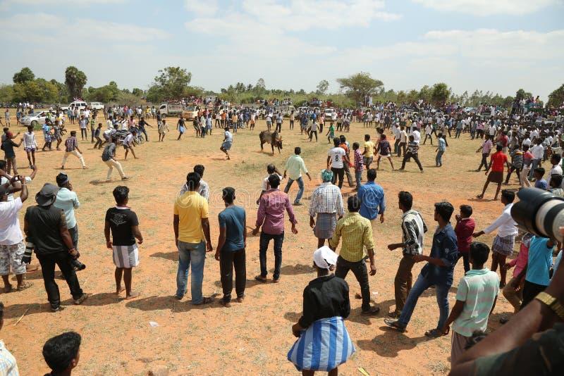Festival del virattu de Manju fotos de archivo