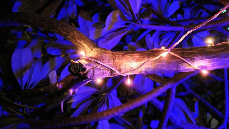 Festival delle luci fotografia stock