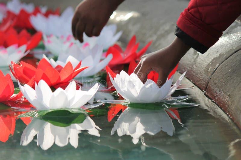 Festival die van Dewali lotusbloembloemen op water aanbieden stock foto