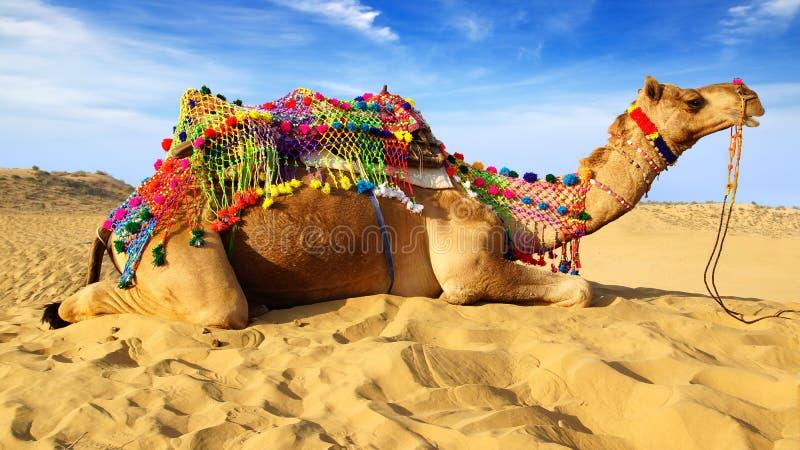 Festival do camelo em Bikaner, India imagem de stock