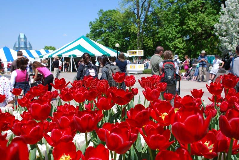 Festival do Tulip em Ottawa foto de stock royalty free
