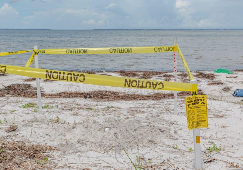 Festival esquecido da tartaruga de mar da costa foto de stock royalty free