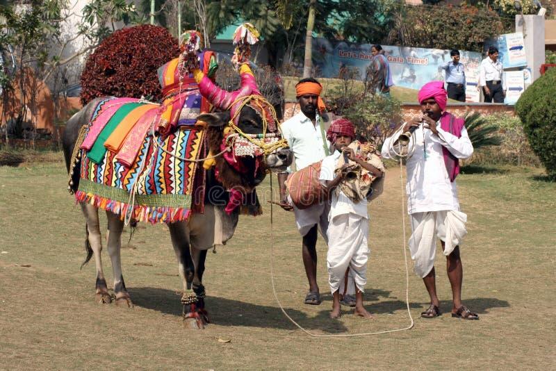 Festival hindu decorado do touro-pongal fotografia de stock royalty free