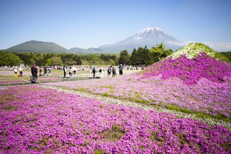 Festival Japans Shibazakura mit dem Feld des rosa Mooses von Kirschblüte stockfotografie