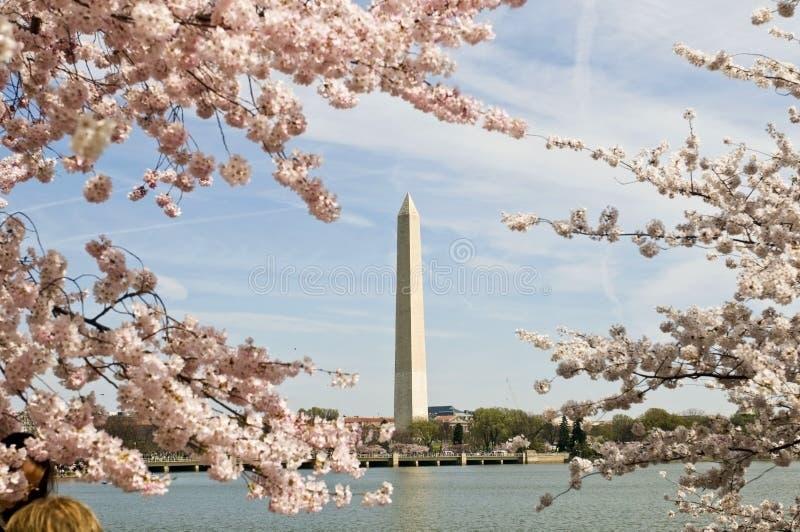 Festival national de fleur de cerise images stock