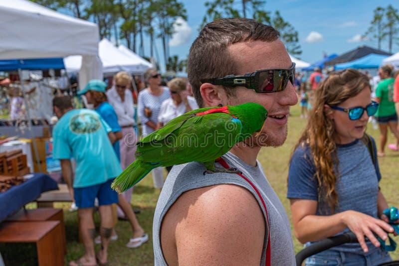 Festival oublié de tortue de mer de côte photos stock