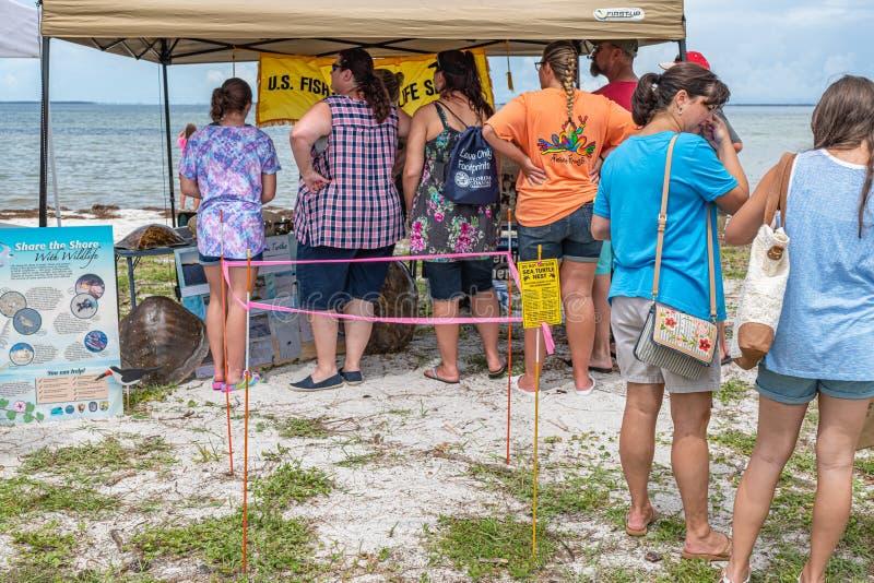 Festival oublié de tortue de mer de côte image stock