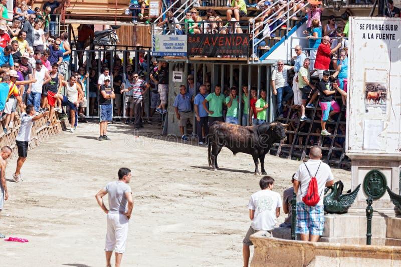Festival von Stieren und von Pferden in Segorbe stockbild