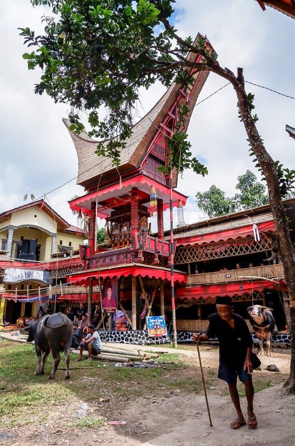 Festivals traditionnels de Torajan chez Sulawesi photographie stock libre de droits