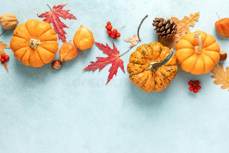 Festive autumn pumpkins decor with fall leaves, berries, nuts on blue background. Thanksgiving day or halloween holiday, harvest. Concept. Top view flat lay stock photography