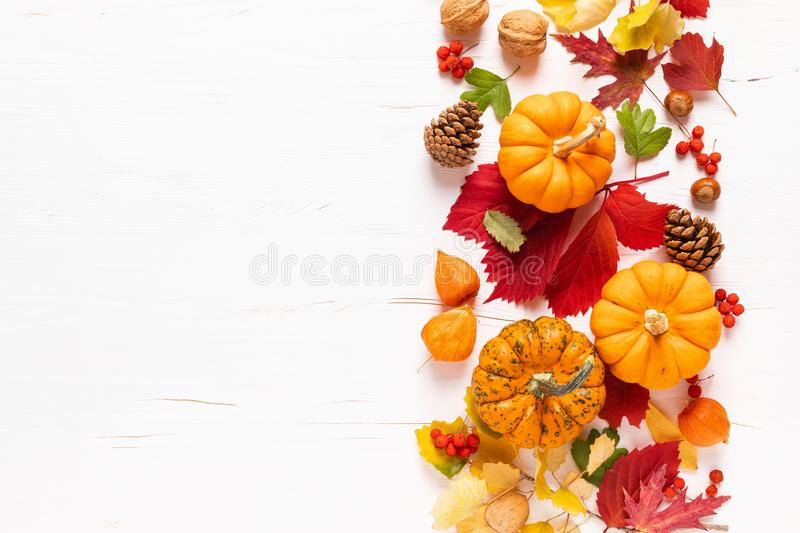 Festive autumn pumpkins decor with fall leaves, berries, nuts on white background. Thanksgiving day or halloween holiday, harvest. Concept. Top view flat lay stock photos