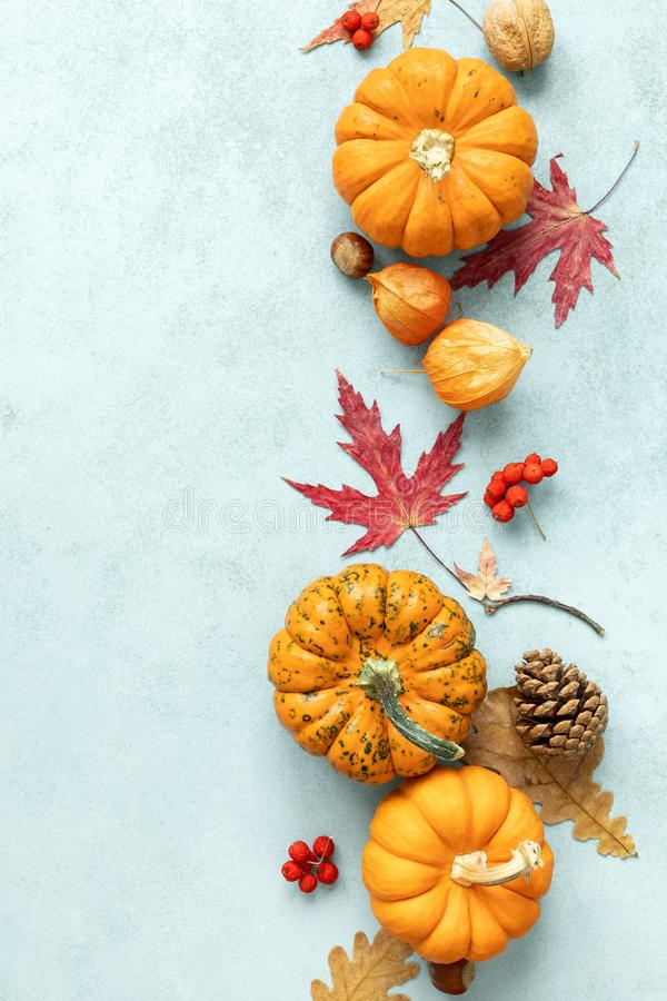 Free Festive Autumn Pumpkins Decor With Fall Leaves, Berries, Nuts On Blue Background. Thanksgiving Day Or Halloween Holiday, Harvest Stock Images - 159865294