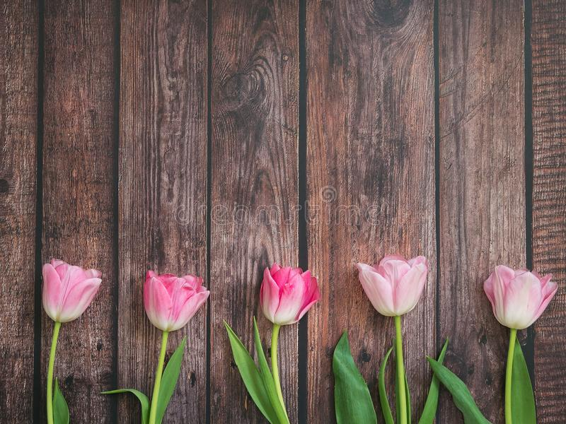 Festive background with pink tulips on wooden table, copy space. Backdrop for cards, invitations and greetings stock images