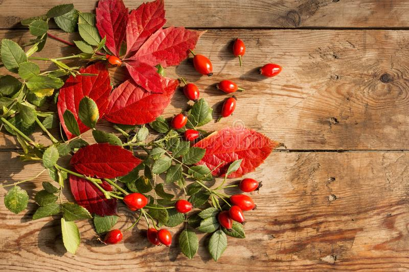 Ripe dog-rose fruits with red and green leaves on an old wooden table. stock photo