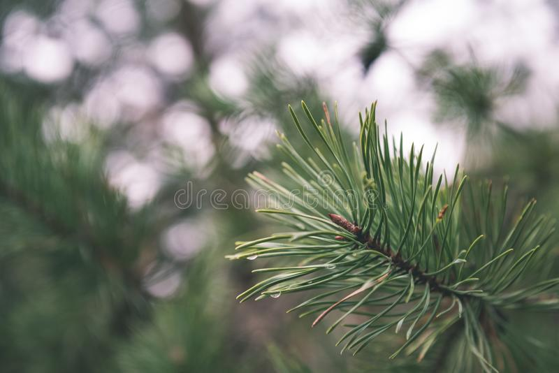 festive christmas tree on green background - vintage film look royalty free stock images