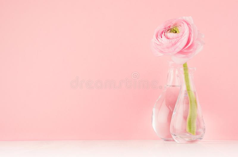 Festive decoration for home with pink buttercup flower on soft light white wood board, design for wedding, valentine day, birthday. Gift stock photos