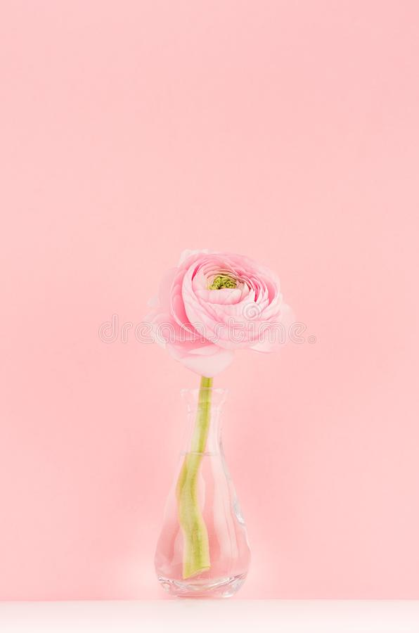 Festive decoration for home with pink buttercup flower on soft light white wood board, vertical, design for wedding, valentine day stock photos