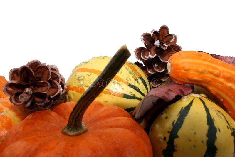 Festive Fall Gourds stock photo