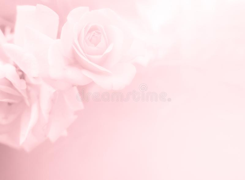 Festive flower on pink pastel background. Overhead top view, flat lay. Copy space. Birthday, Mother`s, Valentines, Women`s, Weddin stock photo