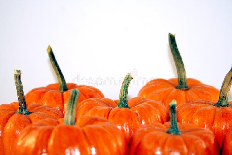 Festive Halloween Pumpkins royalty free stock image
