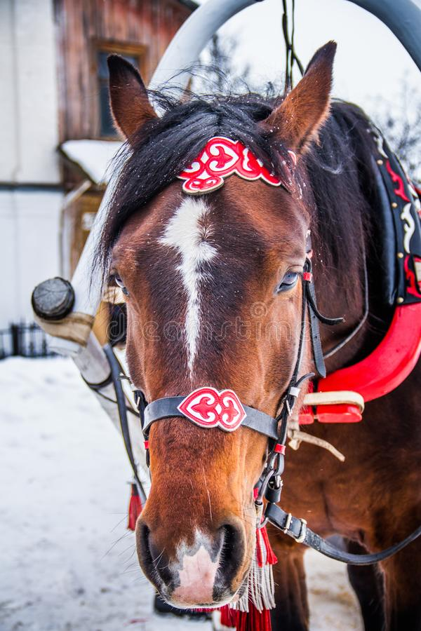 Festive horse at work stock images