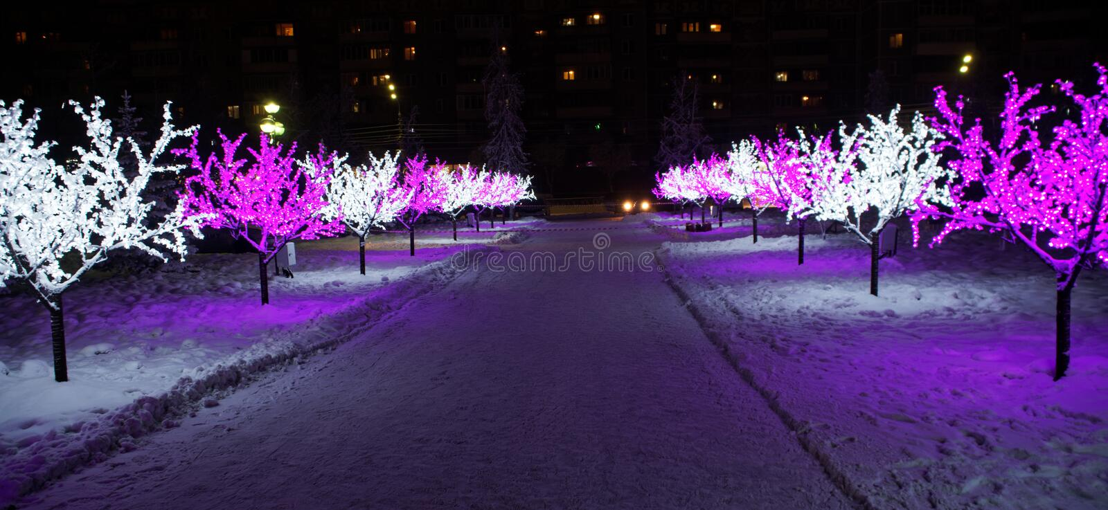 Festive LED lights on the branches of trees in the winter night city. Winter holidays royalty free stock photo