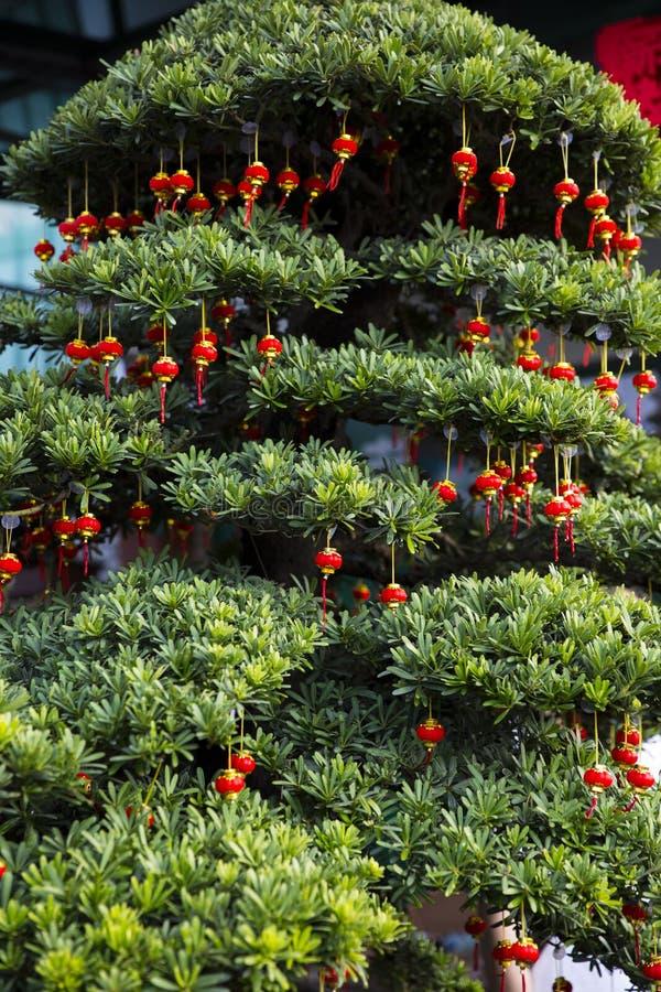 festiwal chińska wiosna Drzewni i Chińscy lampiony obraz stock