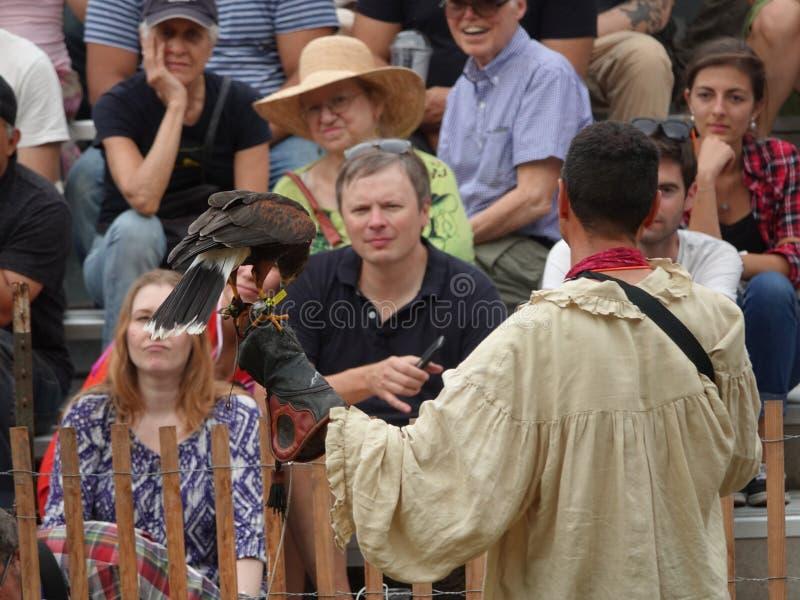 2016 festiwalu Średniowieczny sokolnik 1 fotografia royalty free