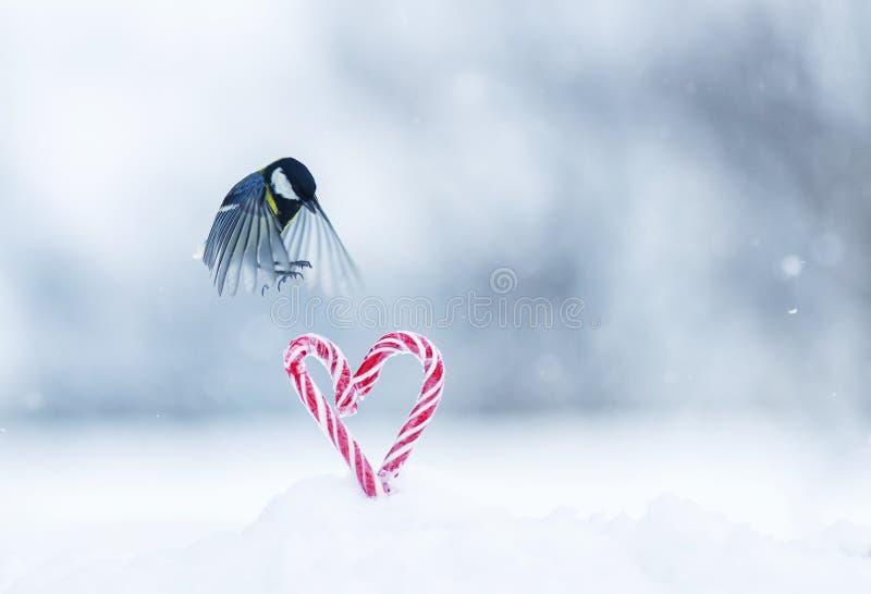 Festliche Grußkarte mit nettem kleinem Vogel, den Meise in den Park zum roten Schatz fliegt, formte Lutscher im weißen Schnee auf stockfotografie