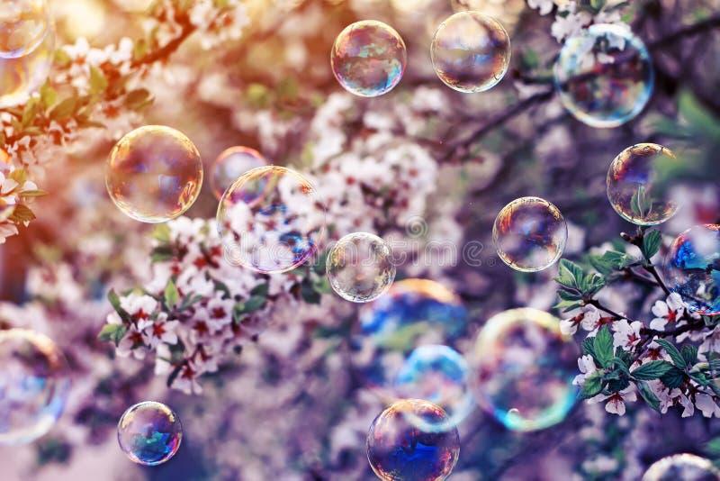 festlig bakgrund med flygbubblor som på våren skimrar i den soliga trädgården för sol ovanför filialen för körsbärsröd blomning royaltyfri fotografi