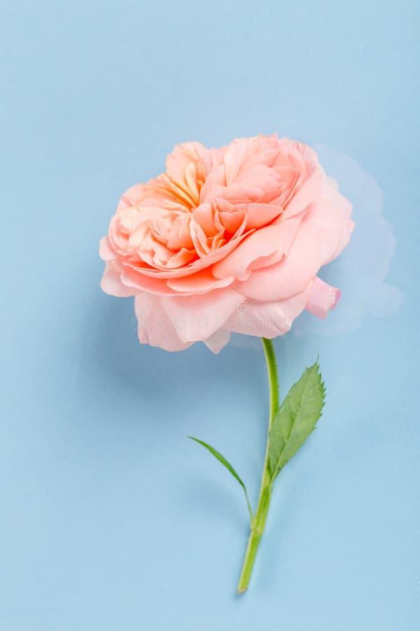 Festlig blommasammans?ttning p? den bl?a bakgrunden ?ver huvudet sikt arkivfoto