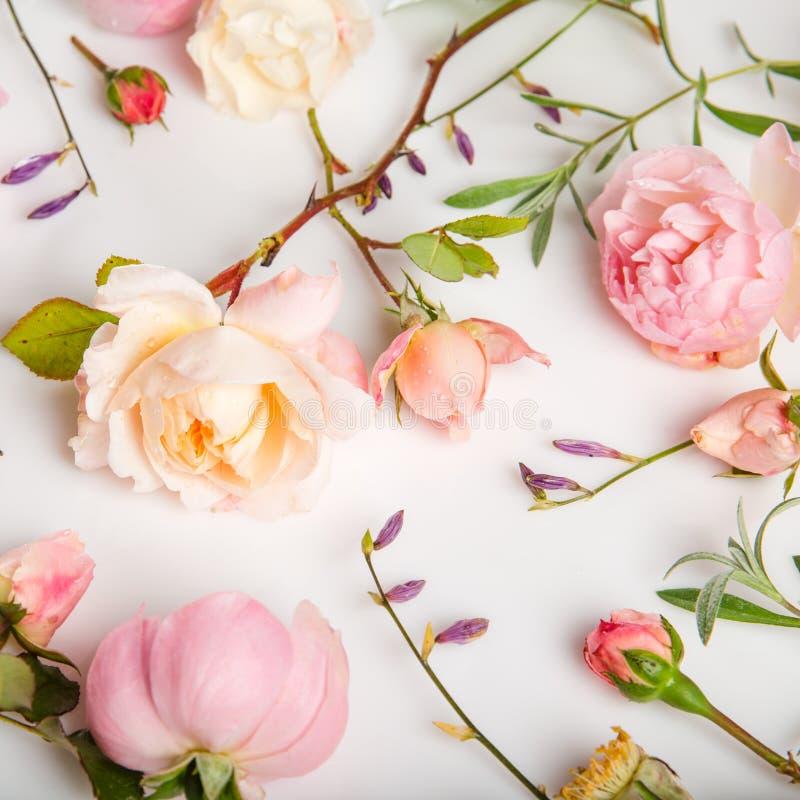 Festlig blommasammans?ttning p? den vita bakgrunden ?ver huvudet sikt arkivfoton